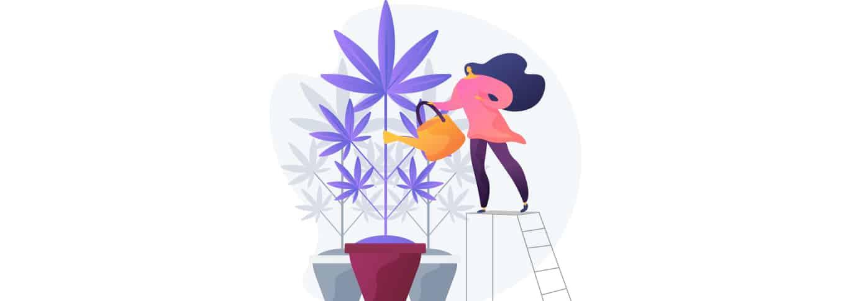 4 actions de cannabis sur la TSX à surveiller