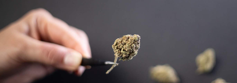 Actions de cannabis
