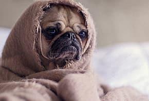 Quelle est la meilleure assurance pour chien au Québec?